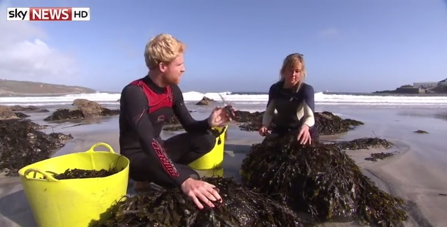 Harvesting seaweed is more fun in the summer months